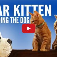 Dear Kitten, sa iti spun ceva despre caini