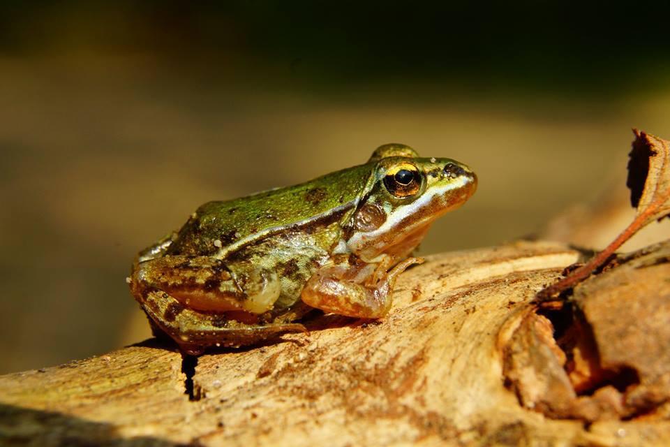 Stiati ca exista tabara de #biodiversitate?